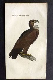Brightly (Pub) 1815 Hand Col Bird Print. Eagle of the Sun